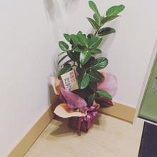 『つくばみらい市 花 観葉植物 美容室』
