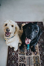 Two happy dogs