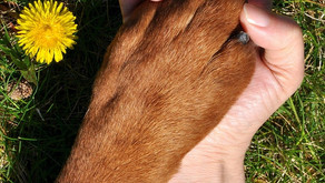 When Should Your Pet See A Chiropractor?
