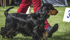 4 Ways Chiropractic Can Help Your Show Dog