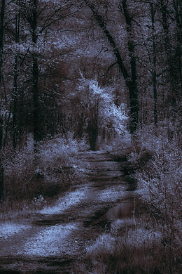 Black and Blue Forest