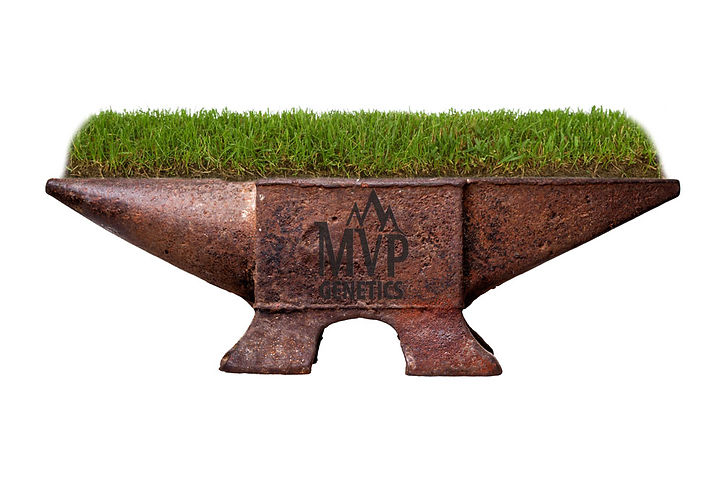 Ironcutter-grass-with-anvil.jpg