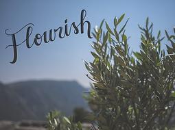 flourish.png