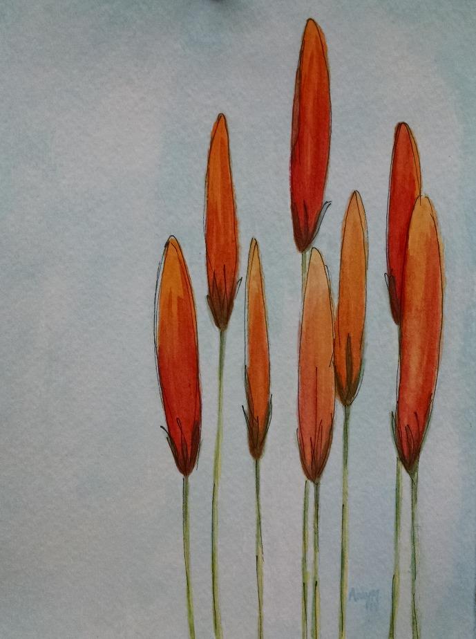 Orange and Wild