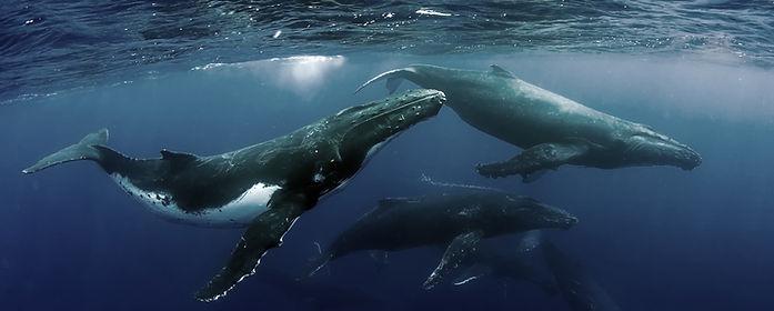 Passei da observação de baleia em Itacaré ahia