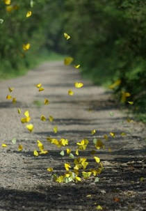 O espetáculo da transformação das borboletas e a gestão de pessoas