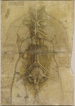 Leonardo da Vinci anatomical drawing