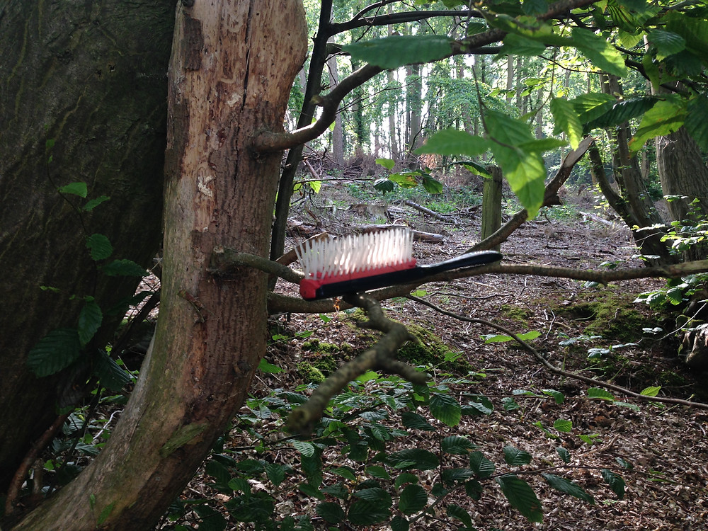 photo of a hairbrush in a tree
