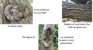 Close up views of trees with captions