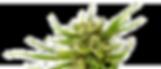 weed-bud.png