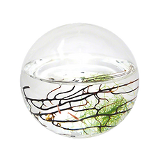 Ecosphere.png