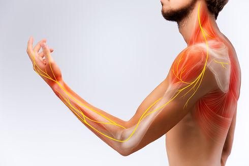 Illustration of the human arm anatomy re