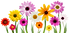 colorful-summer-spring-flowers-png-19.pn