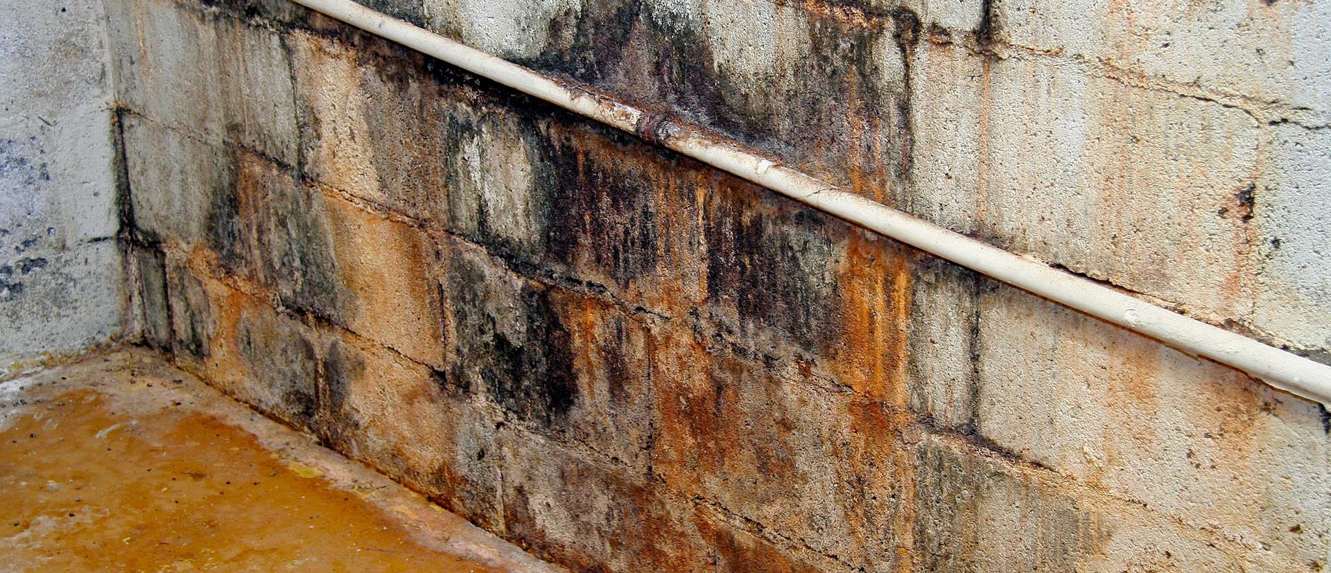 Mold Survey