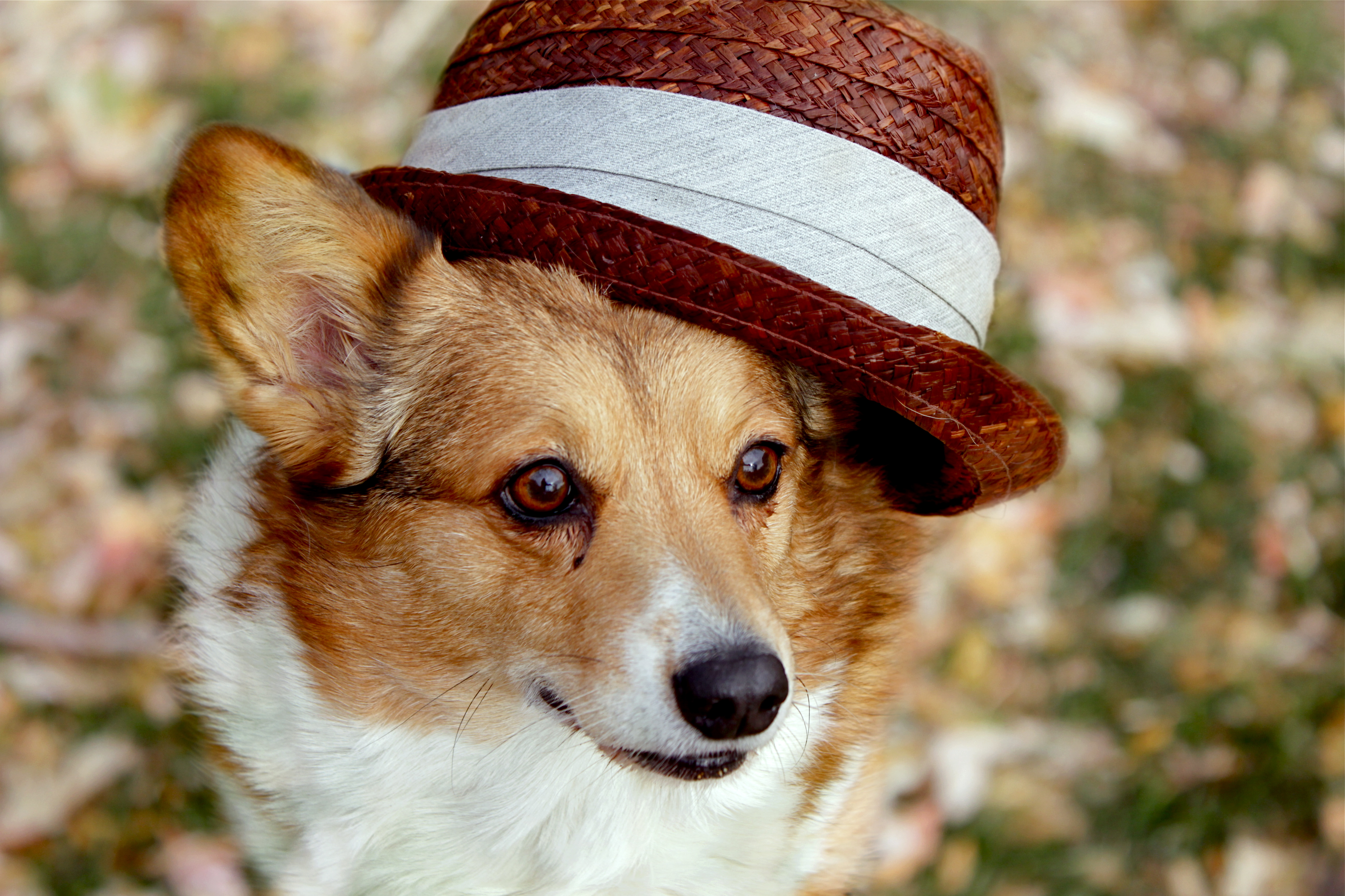 Dogs got style