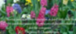Screen Shot 2020-03-20 at 12.35.10 PM.pn