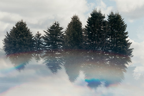Evergreens in the Clouds 12x18 Metal Print