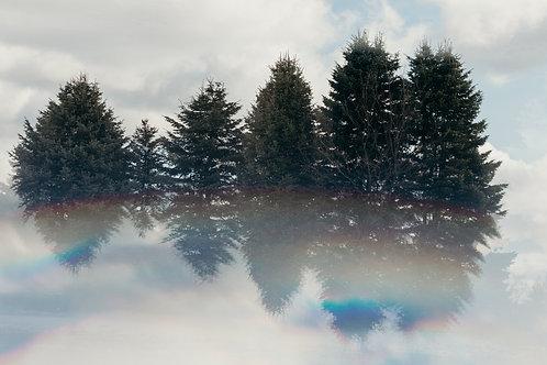 Evergreens in the Clouds 8x12 Fine Art Print