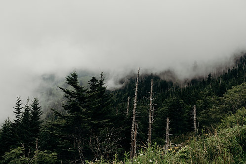 Mountain Fog Digital Download