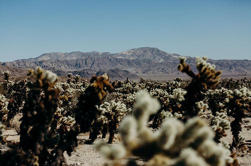 Joshua Tree adventure in the desert