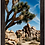Thumbnail: Joshua Tree 12x18 Framed Print
