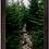 Thumbnail: Evergreen Trail 12x18 Framed Print