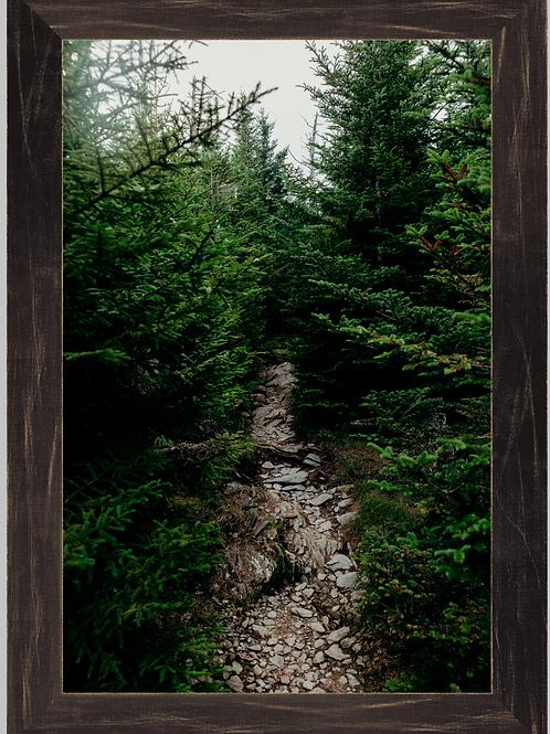Evergreen Trail 12x18 Framed Print