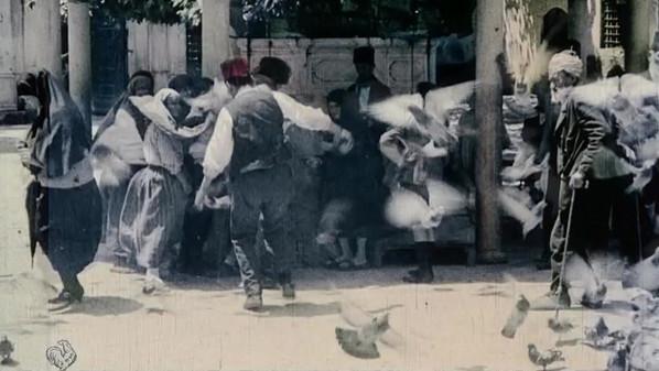 pigeons.mov