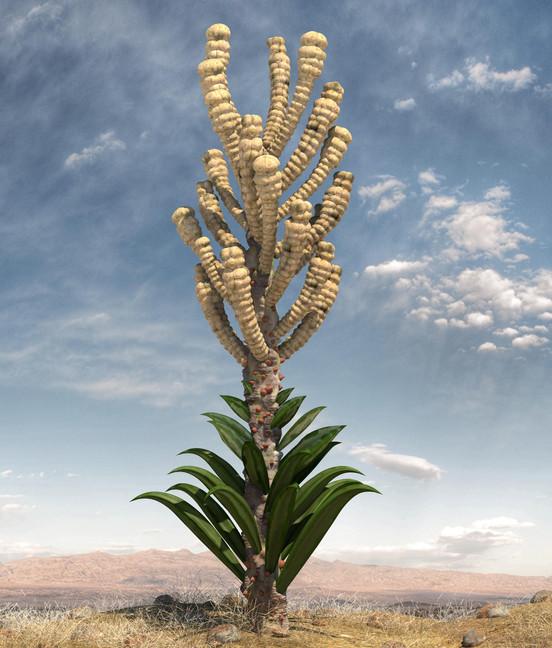 Concept Plant 2