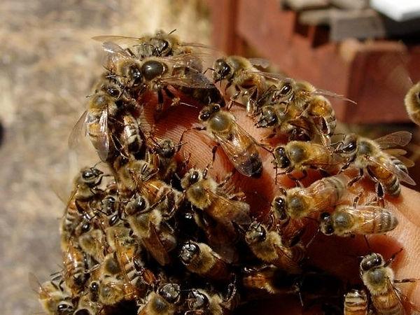 BeesonSeansHand.jpg