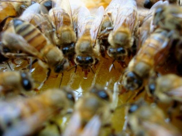 beesfeeding.jpg