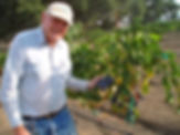 Pictureof Bill Clarke holding a grape cluster in the vineyard