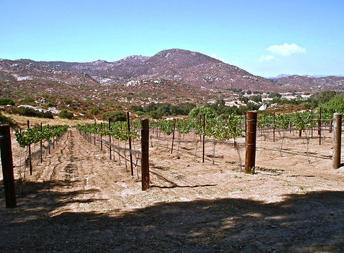 Picture of the vineyard