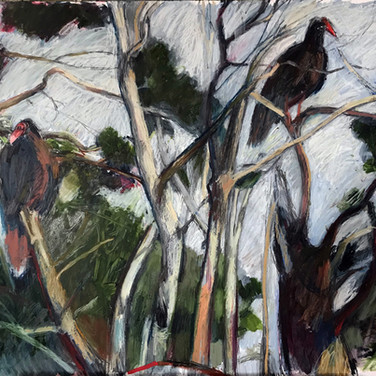Turkey Vultures