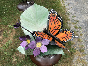 Monarch Butterfly and Purple Flowers