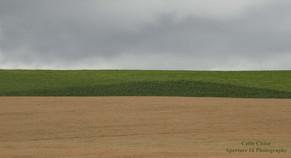 Field by 101