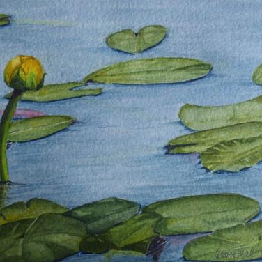 Lillies on Sable Island