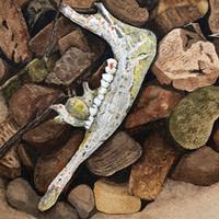 Caribou Jawbone at Rest