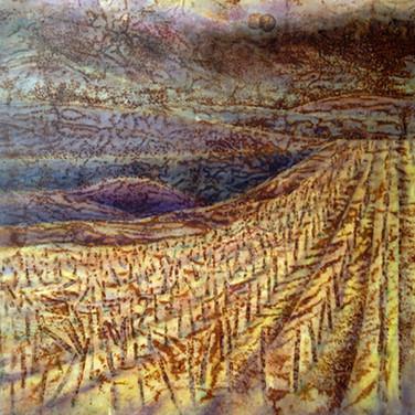 Abandoned Vineyard - Acadia Series