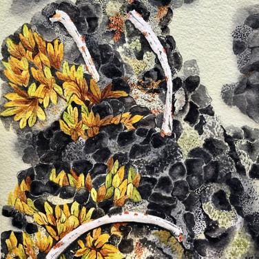 Willow, Lichen, & Ribs
