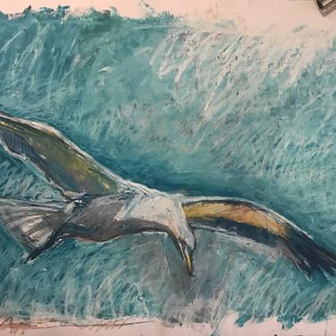Gull Series 1