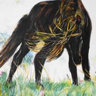 Nova Scotia Sable Island Pony.jpg