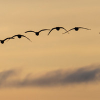 Flight at Sunrise