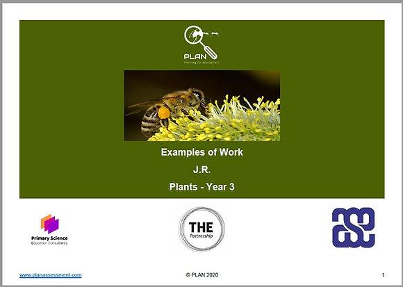Examples of work - Plants (Y3) - JR