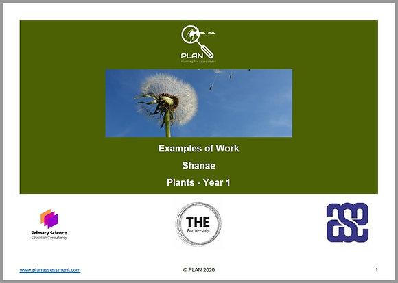 Examples of work - Plants (Y1) - Shanae