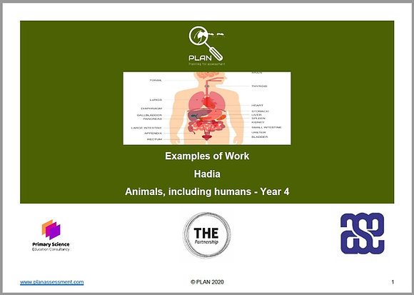 Examples of work - Animals, including humans (Y4) - Hadia