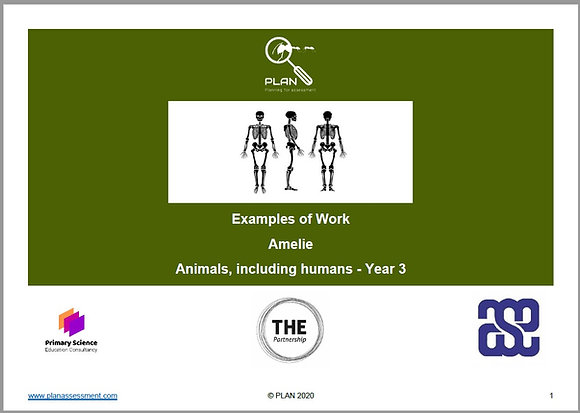 Examples of work - Animals, including humans (Y3) - Amelie