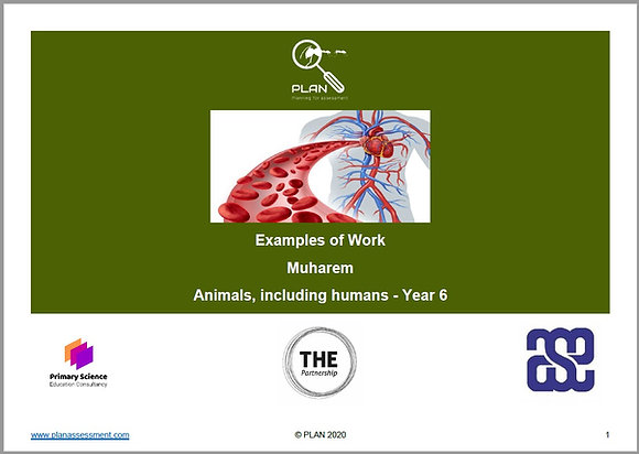 Examples of work - Animals, including humans (Y6) - Muharem