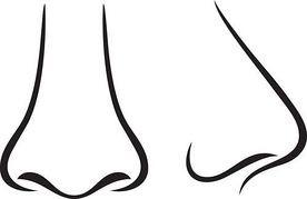 「鼻が高い」顔の基準とは - 正面から見た顔?それとも横顔? -