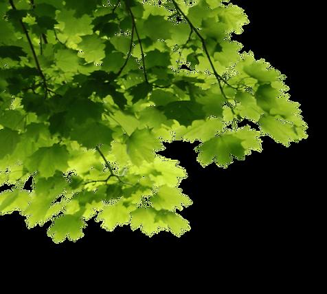 groen1.png